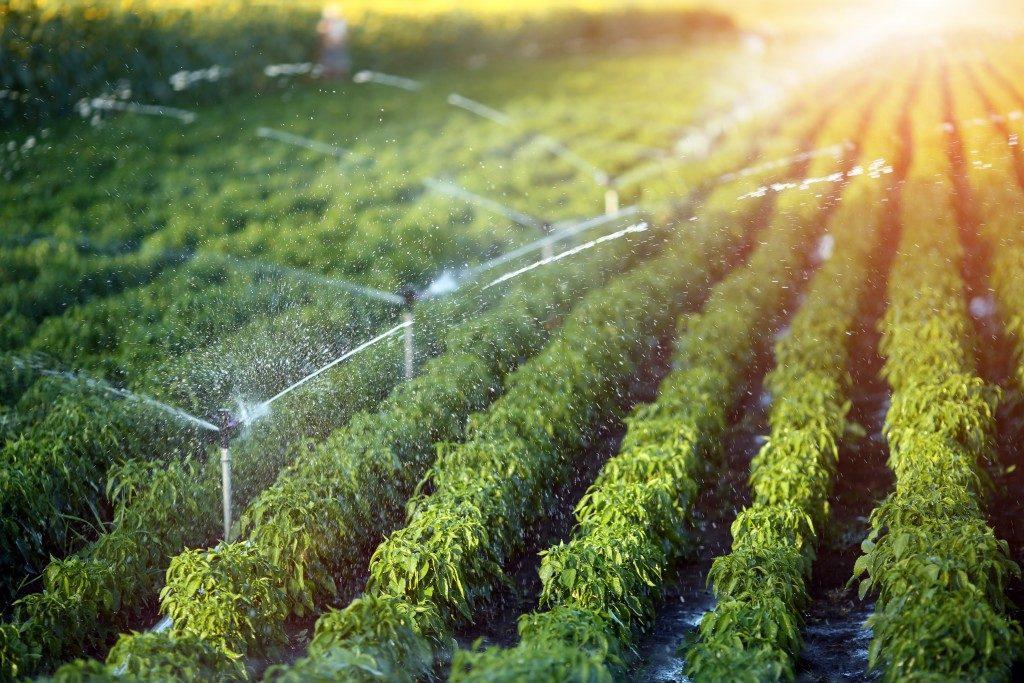 irrigation in a farm