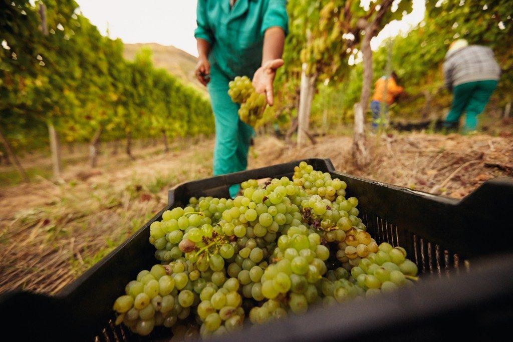 fruit harvesting