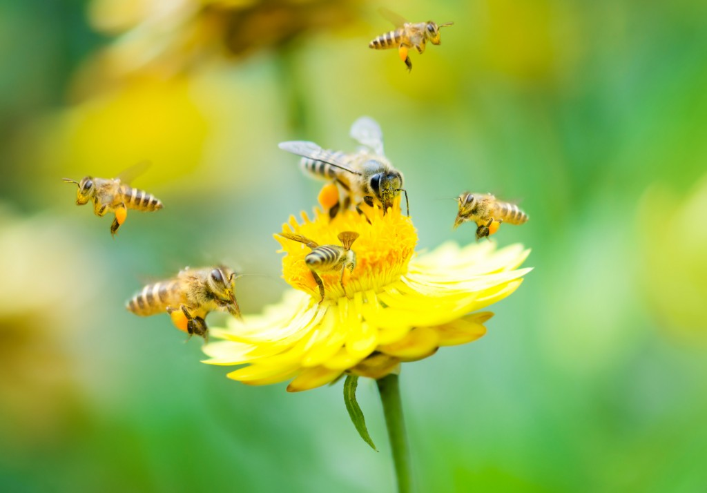 bees and a flower